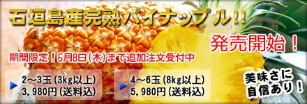 石垣島産完熟パイナップル